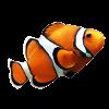 wots_clownfish