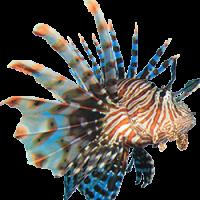 wots_lionfish3